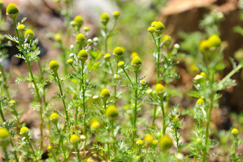 Der Kräutergarten bietet einheimische Kräuter für unsere Spezialitäten